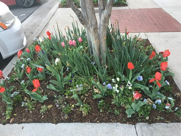 Spring flowers consistently dot the sidelines of Bricktown streets