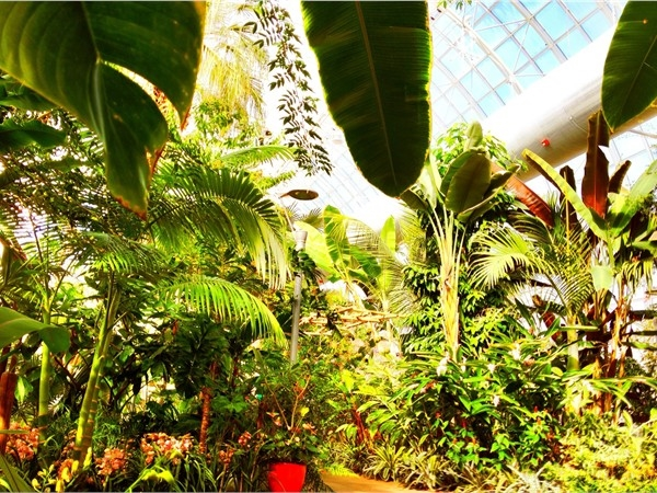 Inside the Myriad Botanical Gardens. Lovely, lush and a perfect way to spend a Saturday in OKC