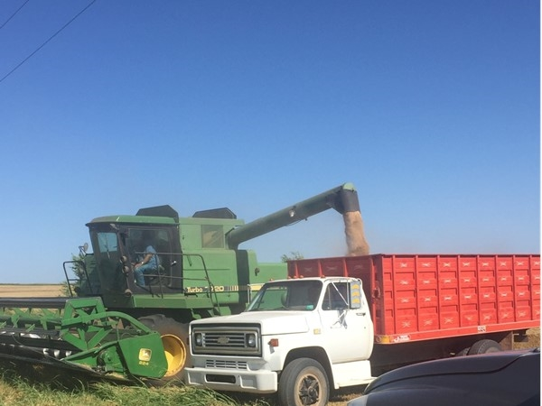 Wheat harvest in Western Oklahoma