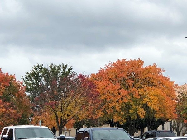 Fall Leaves are beautiful in Downtown Bartlesville