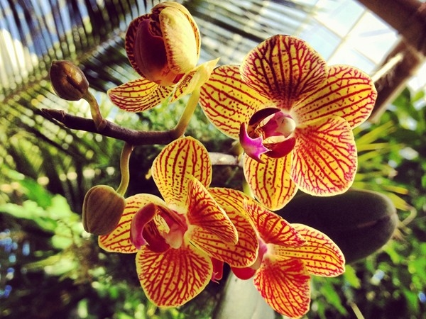 I love the Myriad Botanical Gardens and the orchids