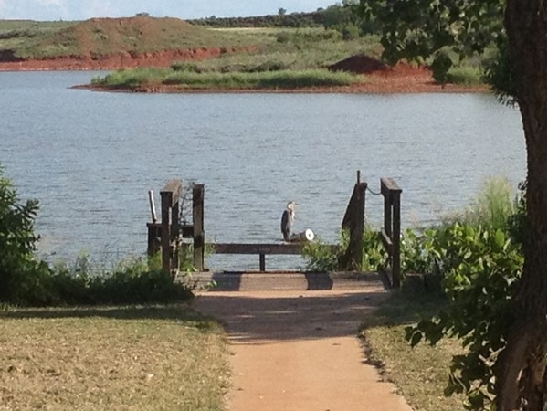 Can you see the bird on the dock?  Roger Mill County has abundant wildlife