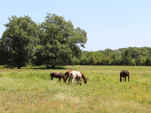 Horse Country, Southeastern Oklahoma - Equestrian trails