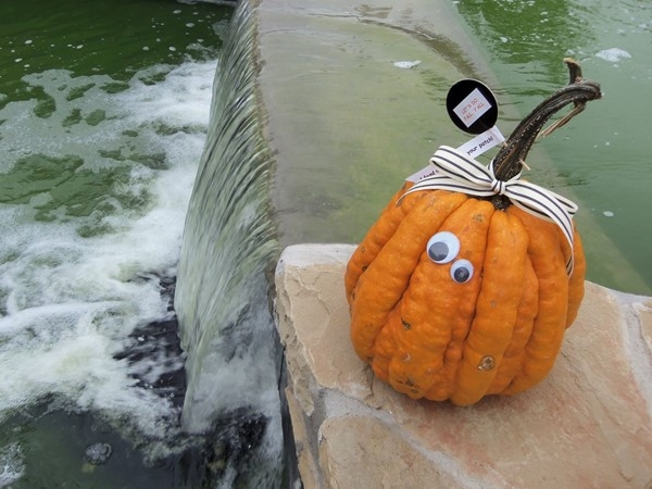Great fall vibe on our Bricktown canal! Happy Halloween