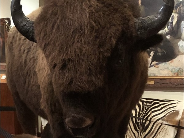 Do you know the history of Buffalo? Find out at Woolaroc Mesuem and Preseve