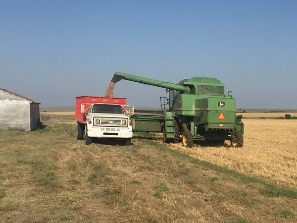 Wheat harvest near Clinton