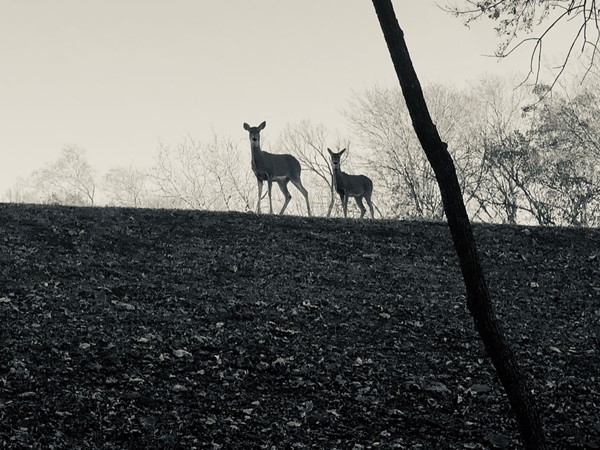 Early morning silhouette of a couple of the neighbors